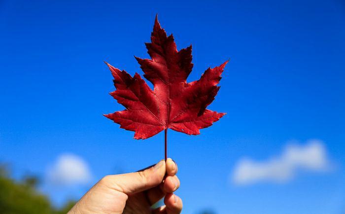 加拿大移民大盘点,常见移民方式你符合哪一种