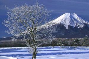 日本移民到底值不值?四大方面揭露日本移民真相