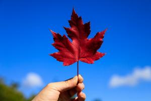 加拿大和美国移民优势对比,哪国谁更有优势