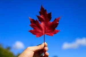 移民到加拿大会后悔吗?让我们一起听听大家都怎么说