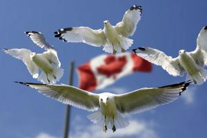 """加拿大魁省2020年将对新移民实施""""价值观测试"""""""