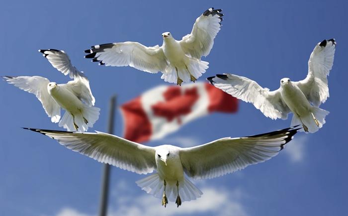 移民加拿大的主要原因?护照可免签185个国家地区