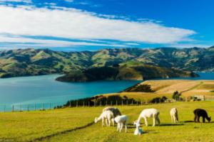【新西兰】让人羡慕的养老制度
